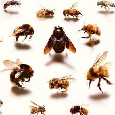 Praat mar Frysk en it Bijepakt